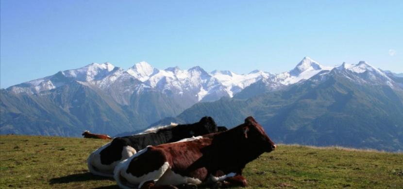 Rakousko: S výhledem na třítisícovky